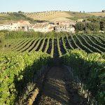 Azienda vitivinicola la Valle di Ceri viti