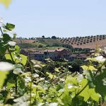 Azienda vitivinicola la Valle di Ceri