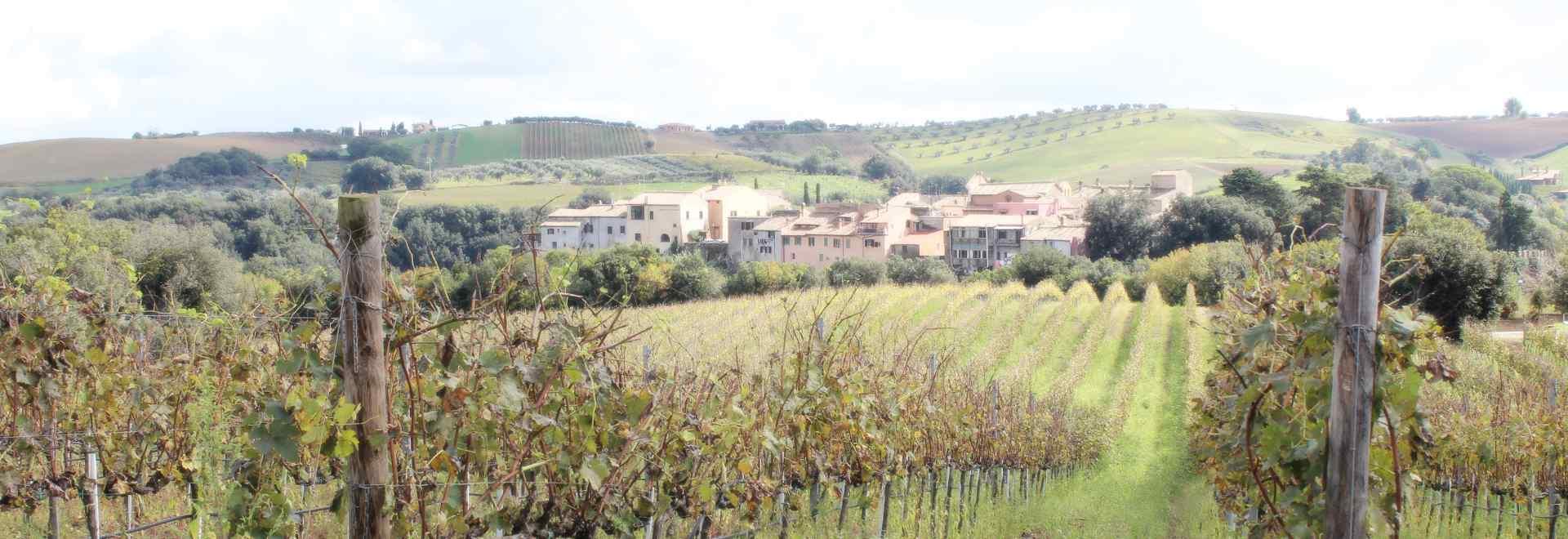 Cantina ed azienda vitivinicola