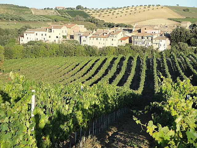 Azienda vitivinicola la Valle di Ceri vitigni