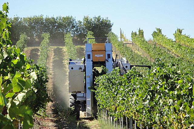 Azienda vitivinicola la Valle di Ceri vendemmia